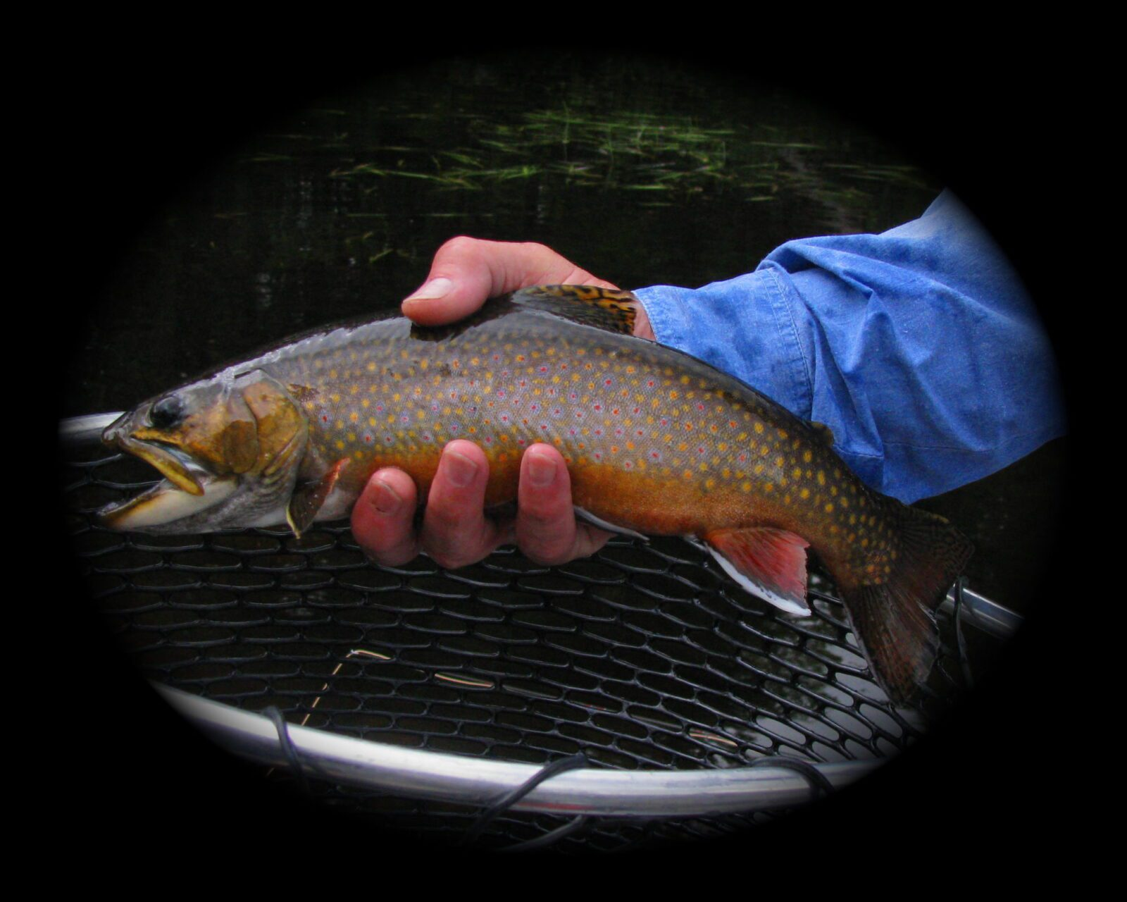 Moosehead Lake Region Wild Brook Trout Ponds are True Jewels