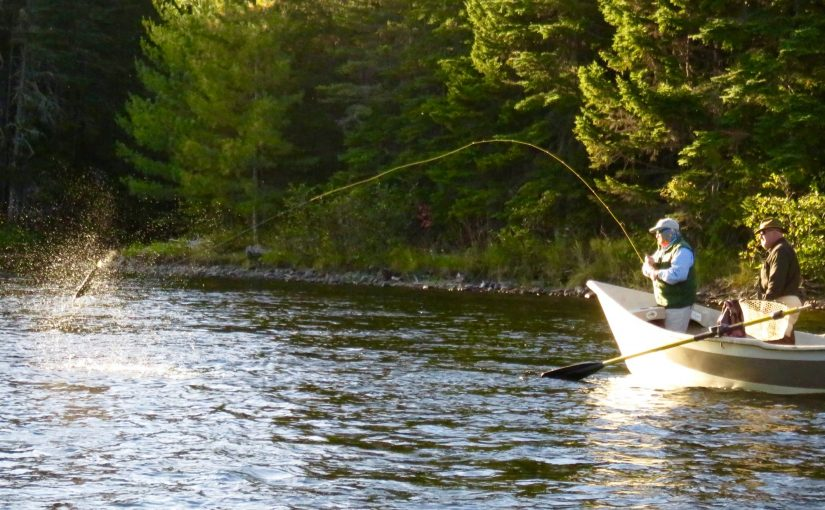 Fishing reports maine maine guide fly shop and guide for Fly fishing maine