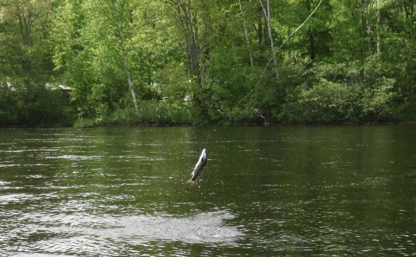 July 4th Fishing Report